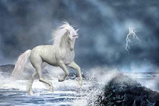carte anniversaire cheval blanc