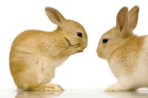 Carte anniversaire gratuite lapin - Image lapin a imprimer ...
