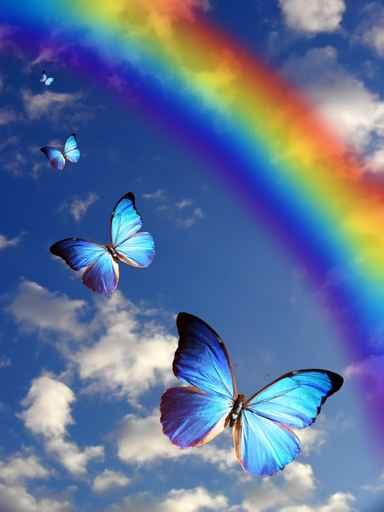 carte de voeux papillons