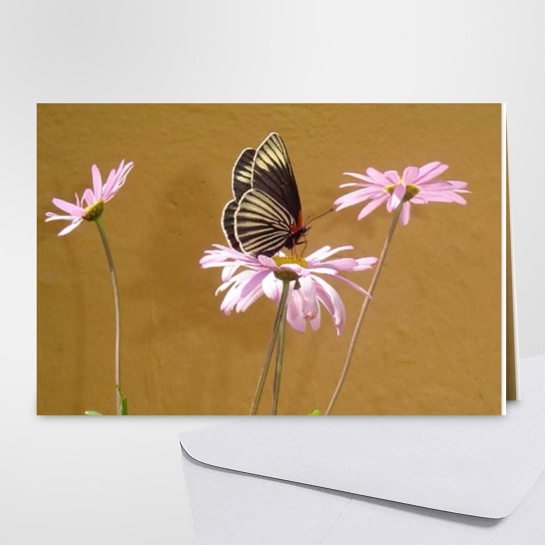 Carte D Anniversaire Papillon Carte Gratuite Carte Insectes