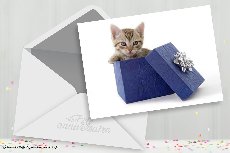 Carte anniversaire cadeau chaton