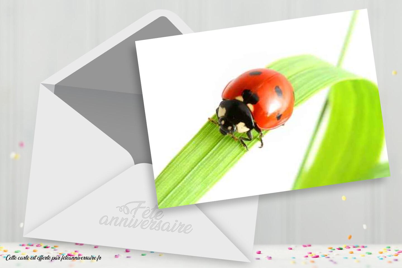 Carte Anniversaire Coccinelle Carte Gratuite Carte Insectes