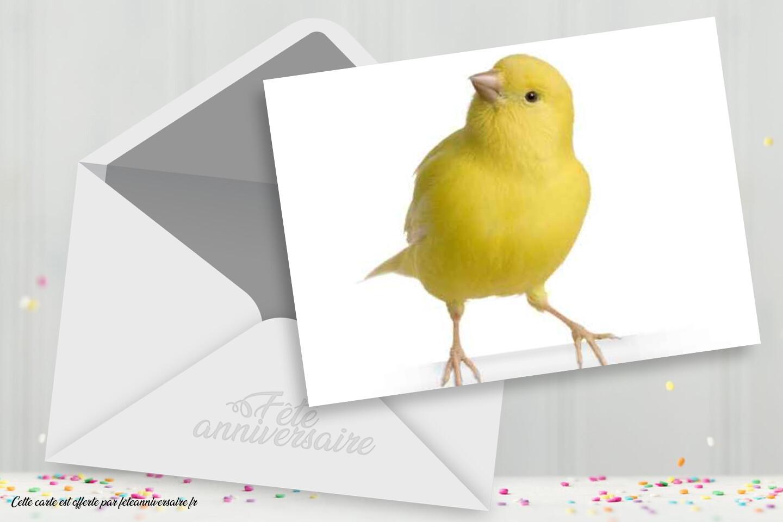 Carte anniversaire poussin