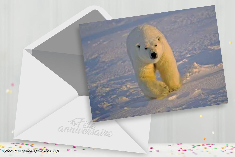 Carte d'anniversaire Ours blanc