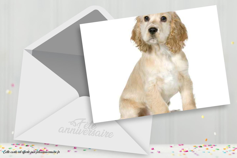 Carte d'anniversaire petit chien blanc - cartes de voeux gratuites