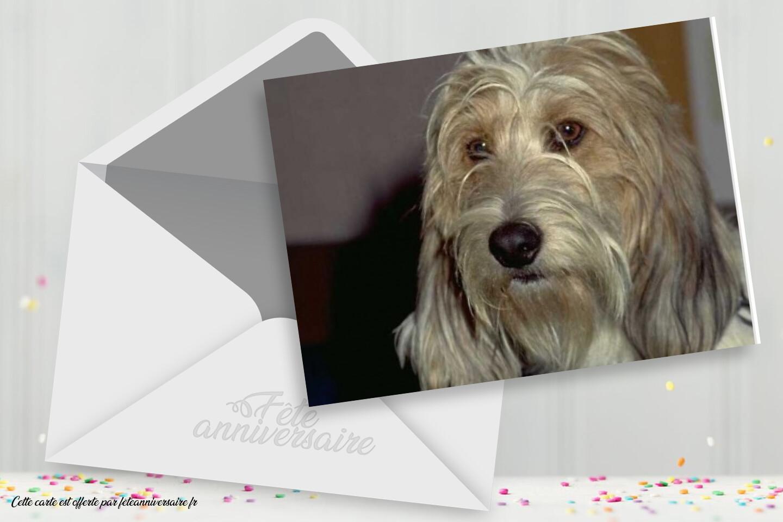 Carte joyeux anniversaire chien