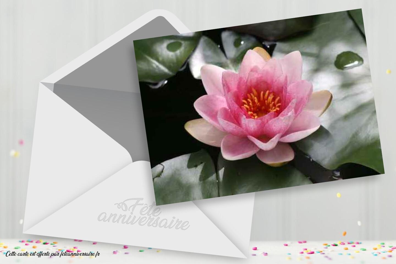 Carte Nenuphar Carte Gratuite Fleurs